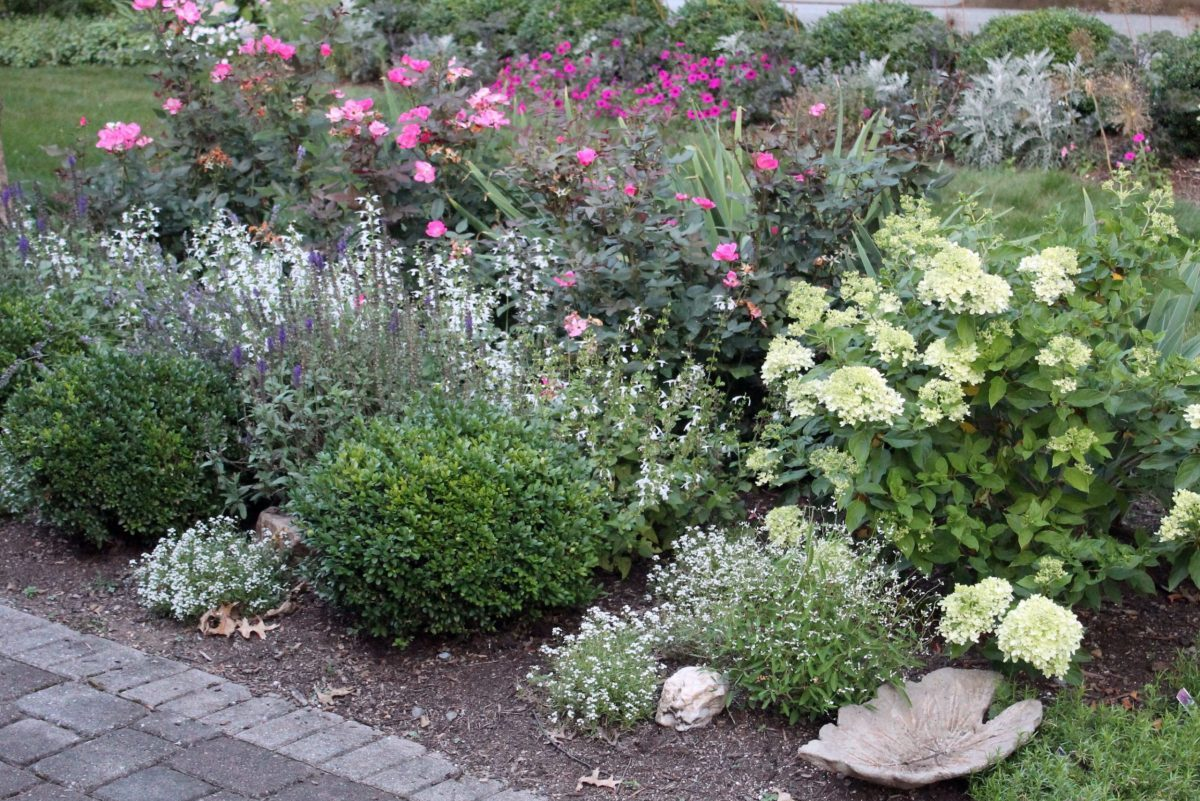 2 No-Fuss Shrubs to Plant and Grow in the Middle of Summer