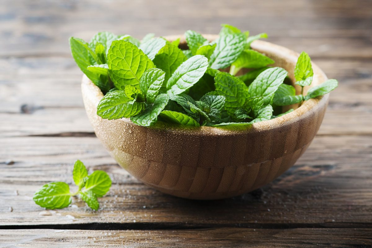 Growing Fresh Herbs at Home is Easier than You Imagined