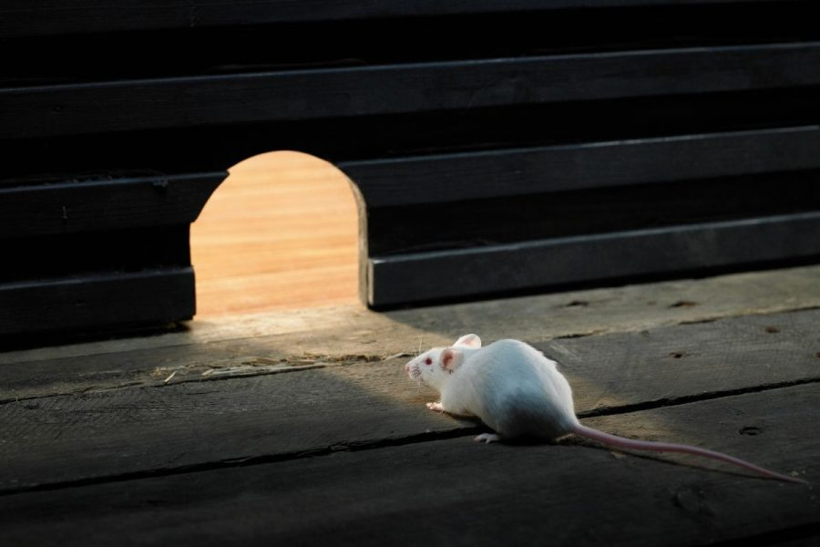 How to Protect Your Furniture in Storage from Mice